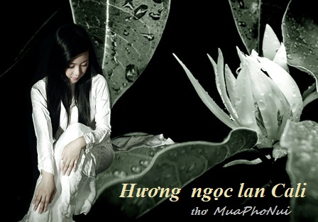 MỘT THỜI ÁO TRẮNG MỘNG TINH KHÔI  - Page 3 Download